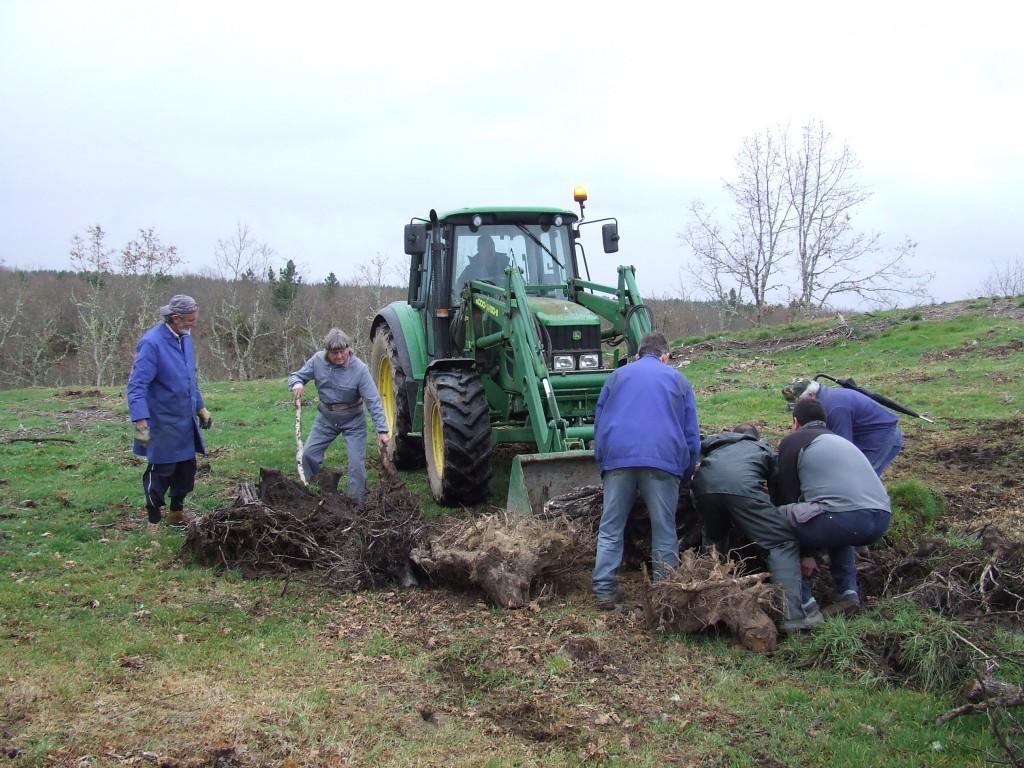 Apañando os cepos no castro do San Lourenzo.